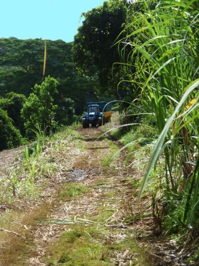 tracteur venant récupérer les cannes